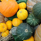 Colorful pumpkins - PhotoDune Item for Sale