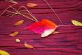 Maple Leaf On Wood - PhotoDune Item for Sale