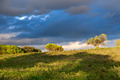 Sunny Landscape with trees and clouds in the Background - PhotoDune Item for Sale
