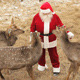 Deer Love Santa - VideoHive Item for Sale