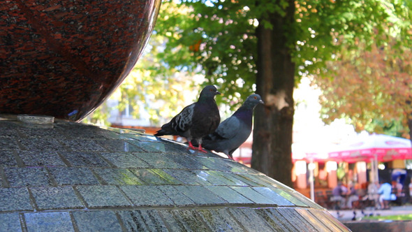 Pigeons In Fountain 3 Videos
