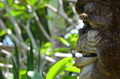 Faces of Bali - Stone Carving - PhotoDune Item for Sale