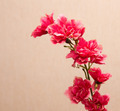red artificial flowers - PhotoDune Item for Sale