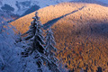 Winter in the Mountains - PhotoDune Item for Sale