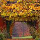 Autumn Rain 5