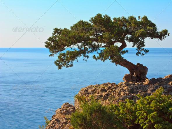 The tree on the rock - Stock Photo - Images