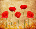 Vintage Poppies Decoration  - PhotoDune Item for Sale
