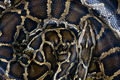 Coiled snake - PhotoDune Item for Sale