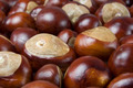 Group of conkers - PhotoDune Item for Sale