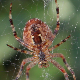 Spider On Spiderweb Winter - VideoHive Item for Sale