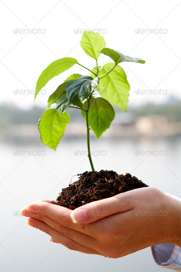 Growing plant - Stock Photo - Images
