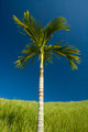 Palm Tree on Blue Sky - PhotoDune Item for Sale