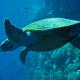 Deep Sea Diving - AudioJungle Item for Sale