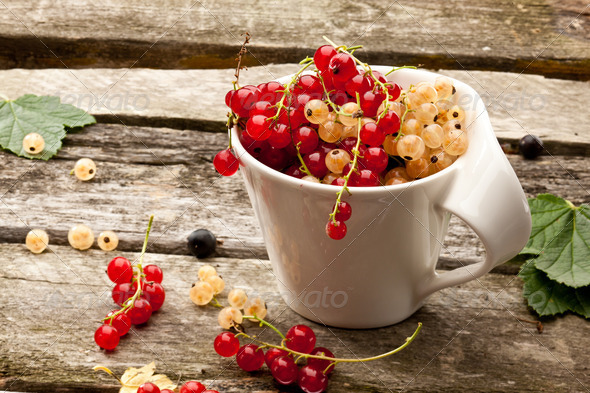 red currant - Stock Photo - Images