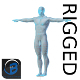 RIGGED Muscular Man Base Mesh HIGH POLY - 3DOcean Item for Sale