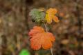 Fall Autumn Leaves - PhotoDune Item for Sale
