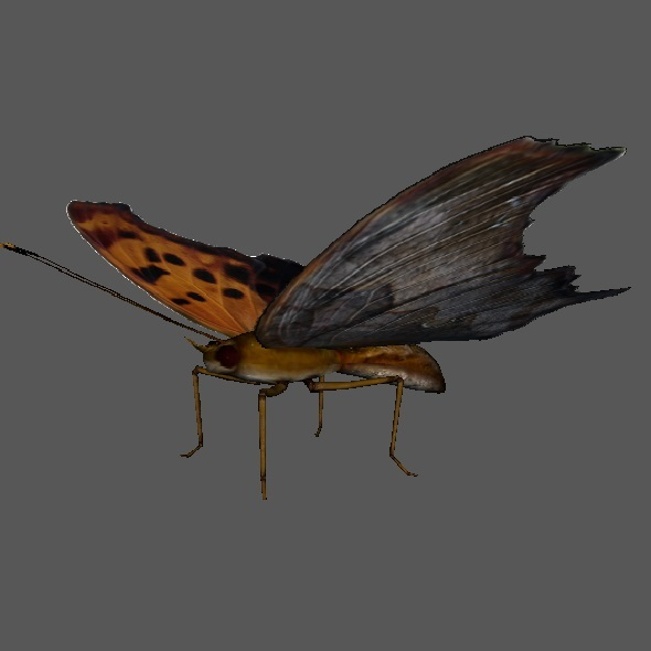 Butterfly Low Poly - 3DOcean Item for Sale