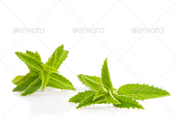 Mint Leaves Isolated - Stock Photo - Images