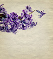 Vintage Background with Lilac Flower - PhotoDune Item for Sale