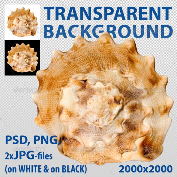 GraphicRiver Seashell 3455212