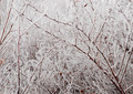 Ice-covered branches - PhotoDune Item for Sale