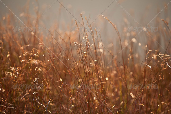 dry plants, autumnal meadow - Stock Photo - Images