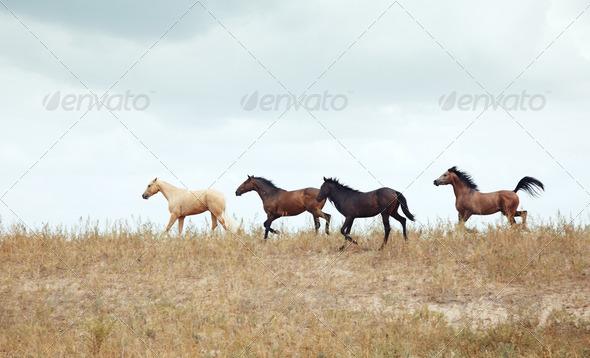 Horses - Stock Photo - Images