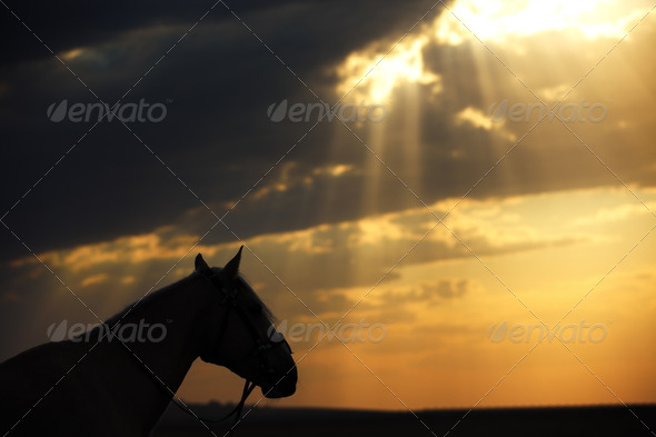 Horse and sunset - Stock Photo - Images