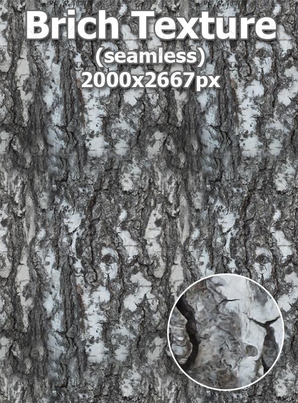 Brich Texture (seamless) - Wood Textures
