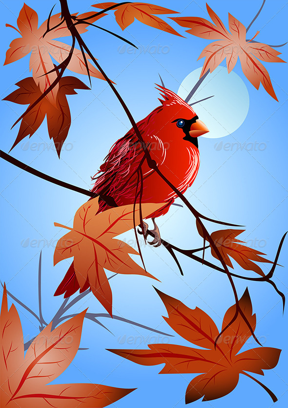 GraphicRiver The Northern Cardinal Sitting on a Maple Branch 3471215