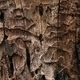 Decaying tree trunk texture - PhotoDune Item for Sale