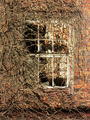 Old broken window with dry plants 1 - PhotoDune Item for Sale