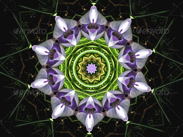 Purple Flower - Stock Photo - Images