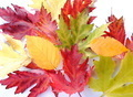 colorful autumnal background with different kind of leaves - PhotoDune Item for Sale