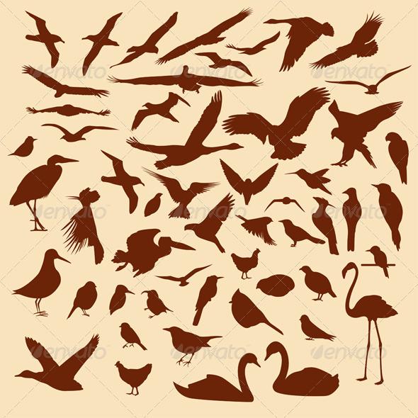 GraphicRiver Bird Silhouettes 3497484
