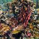 Underwater marine life - PhotoDune Item for Sale