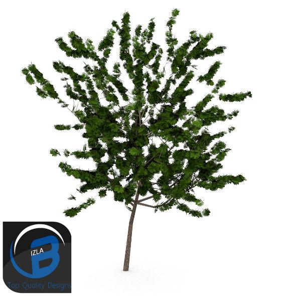 3DOcean Tree 3 3505276