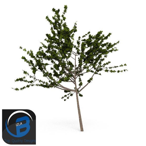 3DOcean Tree 4 3505310