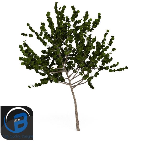 3DOcean tree 7 3505778