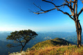 Different Tree on Mountain in Thailand - PhotoDune Item for Sale