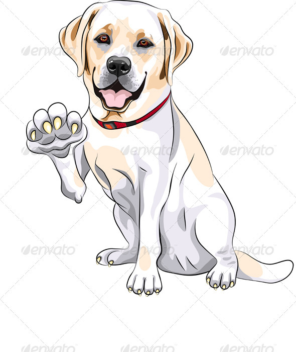 Labrador Retriever Cheerful Smiles and Gives a Paw - Animals Characters