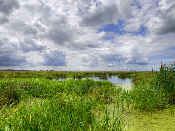 Natural marshland - Stock Photo - Images
