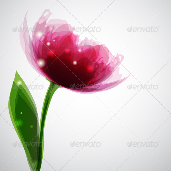 GraphicRiver Pink Peony 3515474