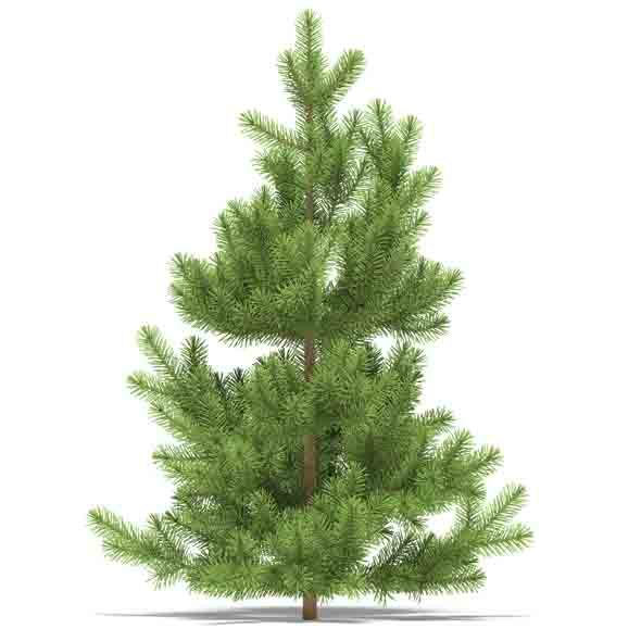 3DOcean Pine 3523726