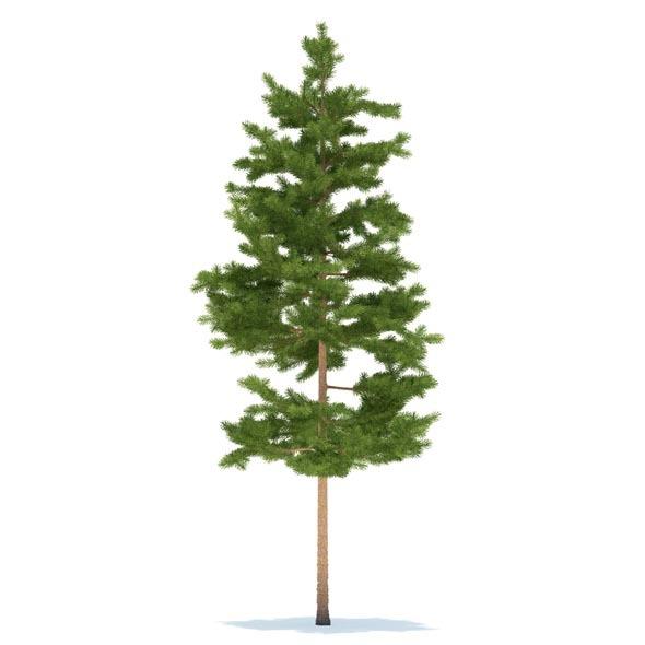 3DOcean Pine 3524020
