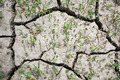 Cracked Soil in Drought - PhotoDune Item for Sale