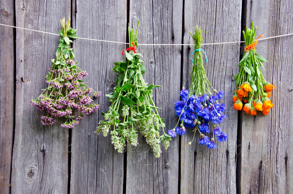 summer medical herbs bunches on wooden wall - Stock Photo - Images