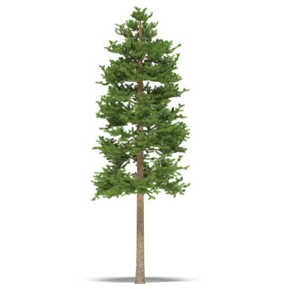 3DOcean Pine 3532502