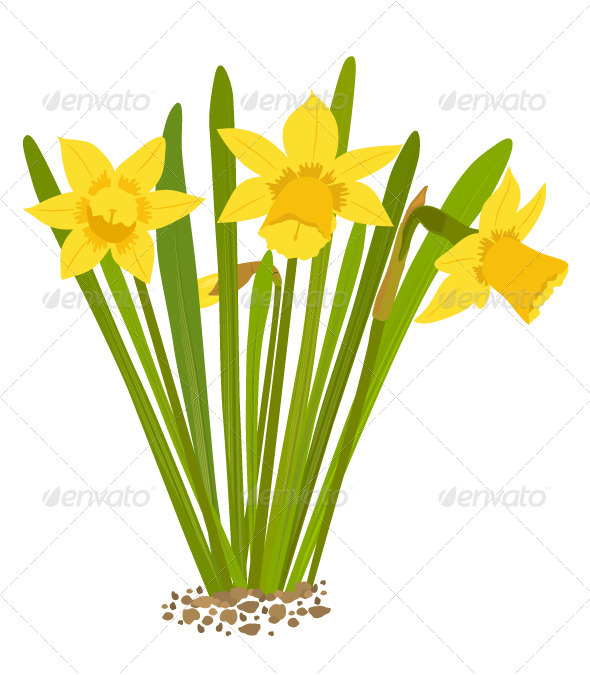 GraphicRiver Daffodils 3517351
