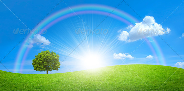 panorama of green field with a big tree and rainbow in blue sky - Stock Photo - Images